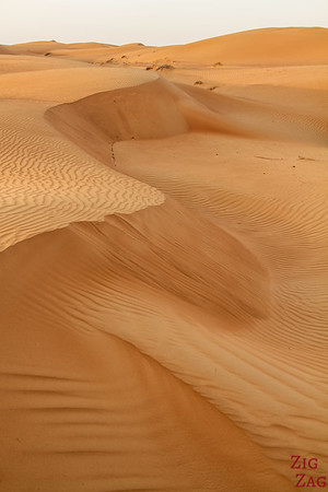 Dunes at Sunrise - Wahiba Sands - Oman 8