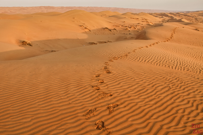 Dunes at Sunrise - Wahiba Sands - Oman 7