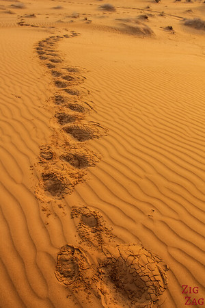 Dunes at Sunrise - Wahiba Sands - Oman 6