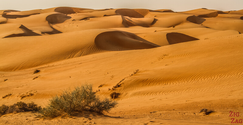 Dunes at Sunrise - Wahiba Sands - Oman 11