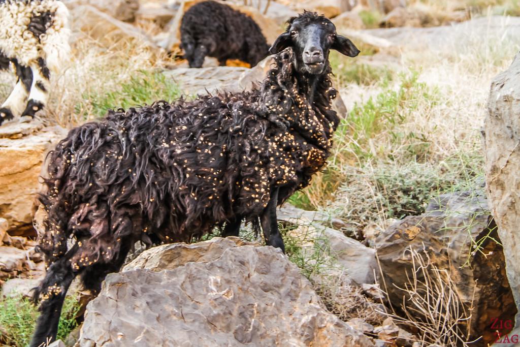 W9 randonnée Misfat al Abriyeen Oman 6