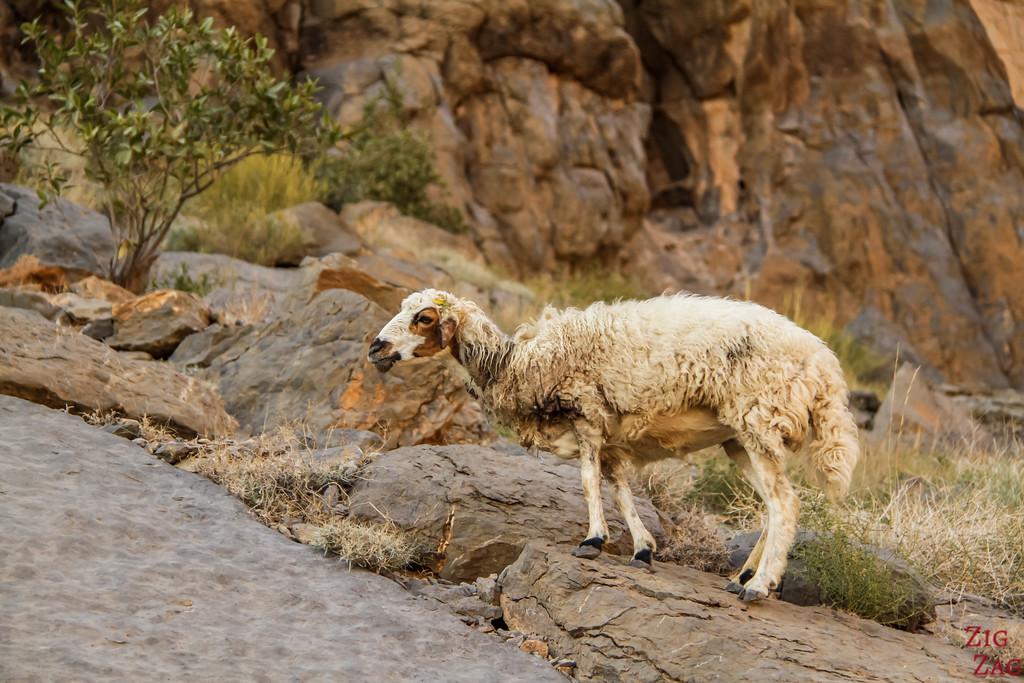 W9 randonnée Misfat al Abriyeen Oman 5