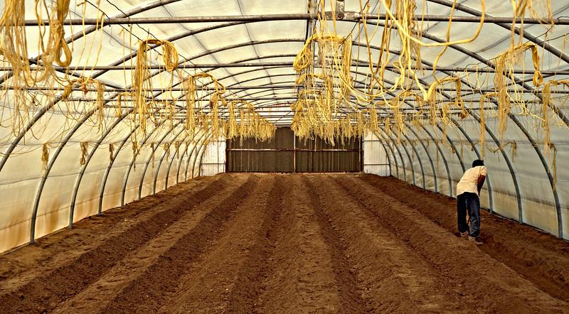 Preparing greenhouse for planting.