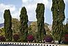 Lebanon Cedars, Al Bustan Resort.