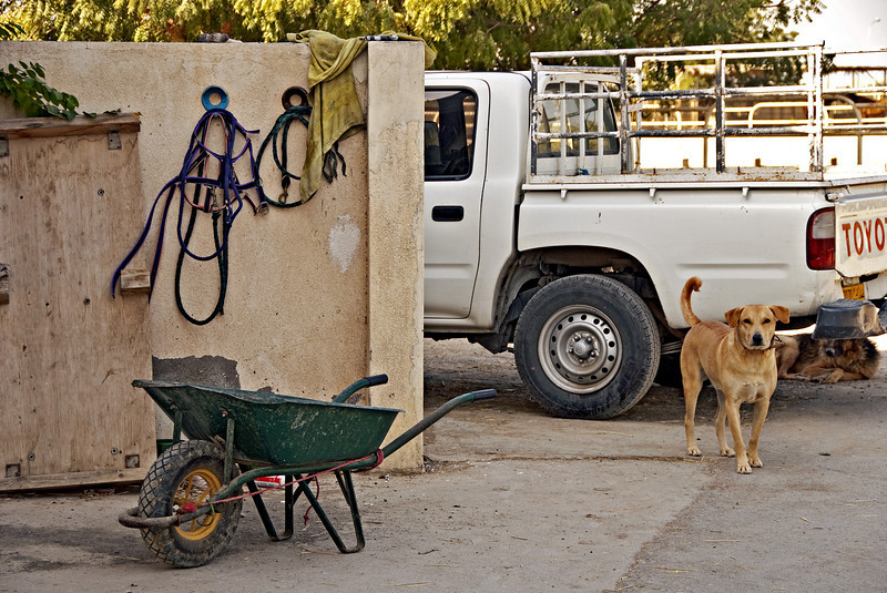 Wheelbarrow and Dogs, the farm.