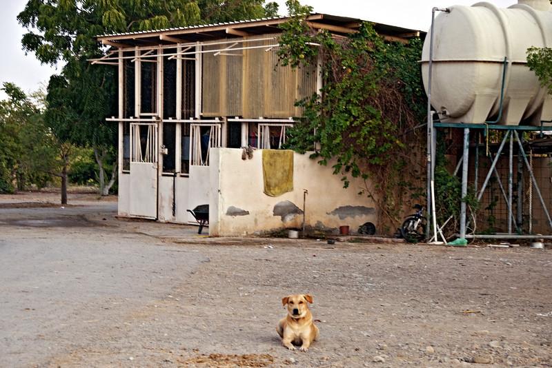 Ferocious guard dog, the farm.