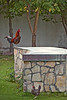 Rooster giving a call to prayer, private home, Muscat.