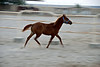 Filly running in her enclosure on the farm 4.