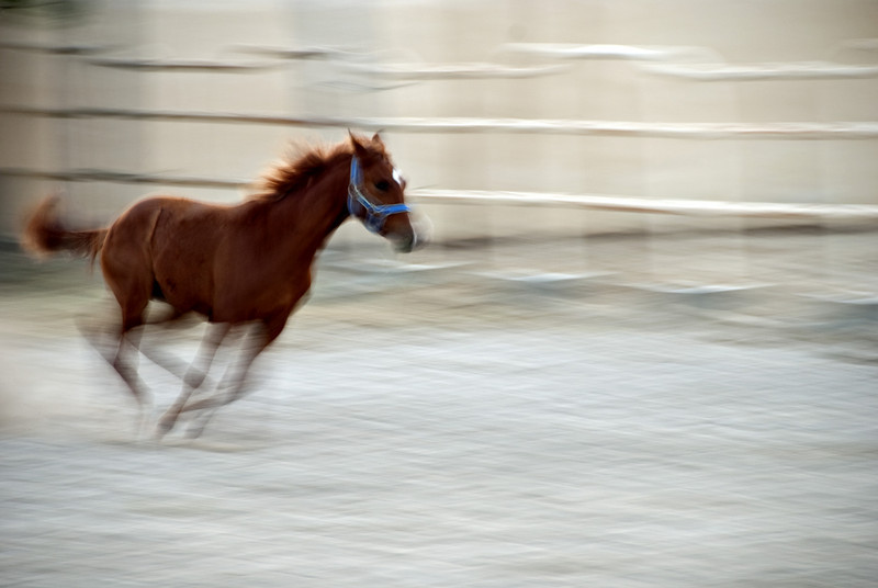 Filly running in her enclosure on the farm 2.