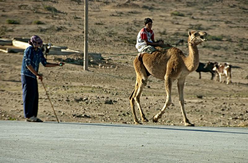 Boy riding camel, near Salalah.