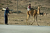 Boy riding camel, near Salalah.