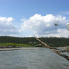 Pelly River --<br /> View of the Pelly River, complete with mosquito