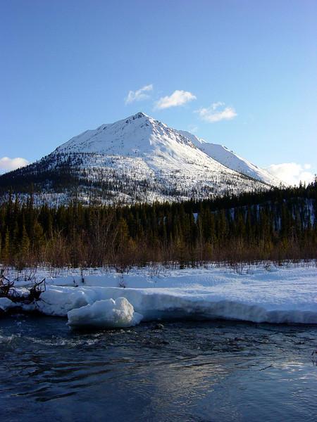 Typical Yukon Beauty