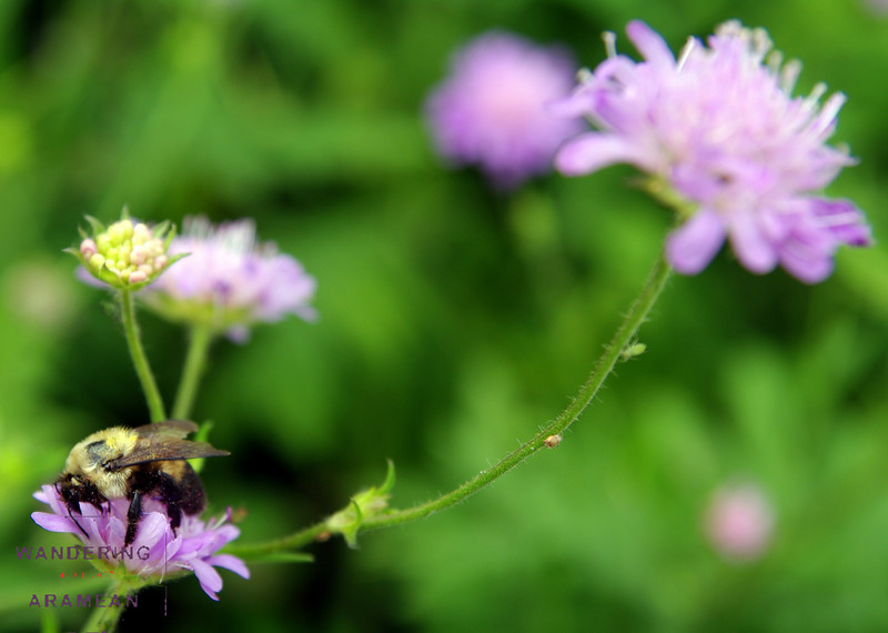 More bee and flower