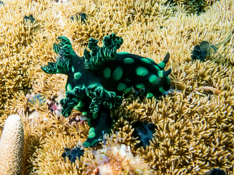 And some nudibranch have hotter outfits than others