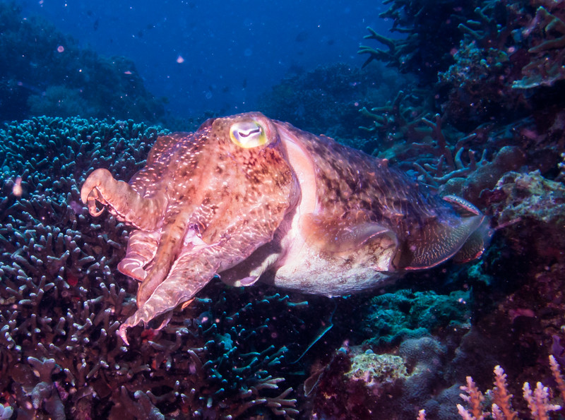 We are always accompanied by the grunt of old cuttlefish