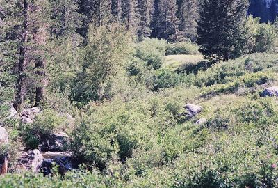 7/8/00 Independence Creek, Onion Valley