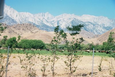 7/9/00 View of Eastern Sierra (Mt. Whitney area) & Alabama Hills from Lone Pine (returning to LA from Onion Valley)