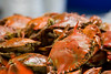 February 16, 2011<br /> Crabs