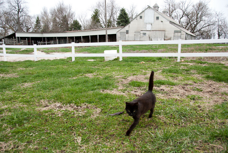 """<span id=""""title"""">Black Cat</span> <em>North of Orange City</em> The farm had two very friendly cats that followed us around. Cool-looking aluminum barn in the background."""