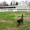 "<span id=""title"">Black Cat</span> <em>North of Orange City</em> The farm had two very friendly cats that followed us around. Cool-looking aluminum barn in the background."