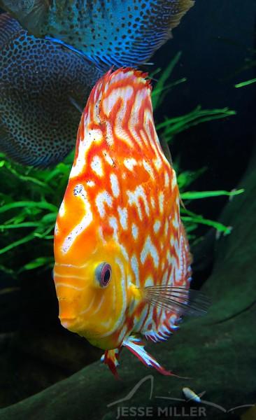 Fish - Georgia Aquarium