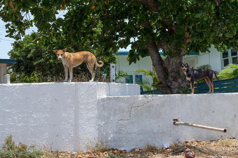 Dogs Near Baby Beach