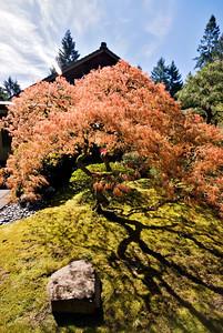 Oregon -661