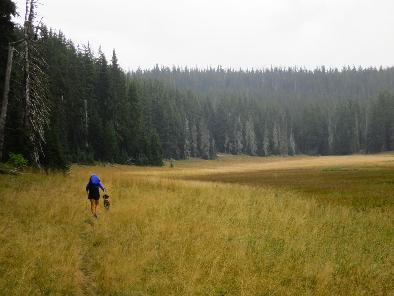 Buck Meadows, overcast and drizzling.