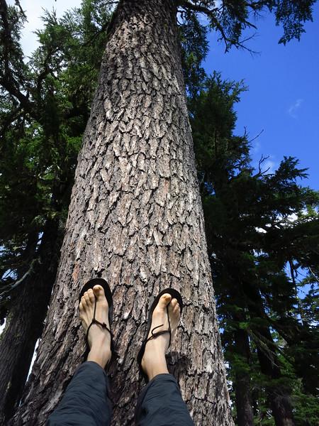 Resting the feet upward.