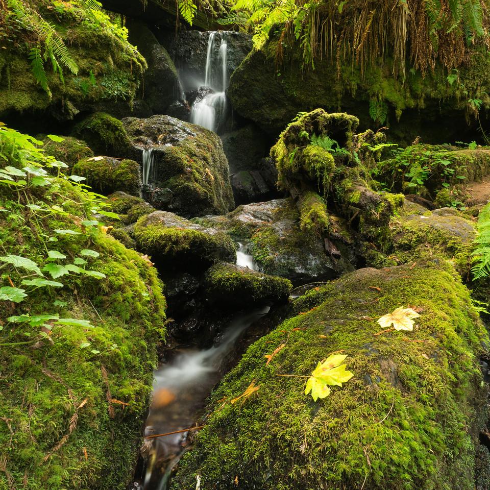 Trilium Falls