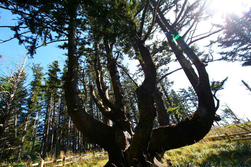 """It's easy to see why this is called """"The Octopus Tree."""""""
