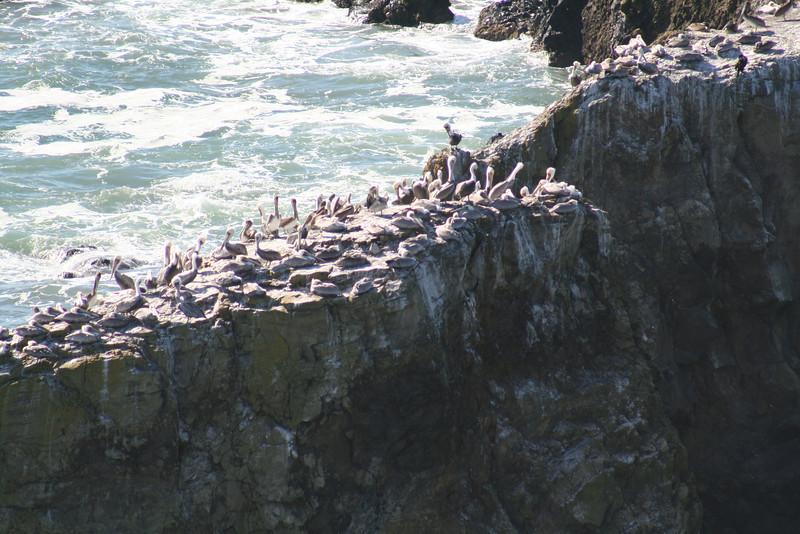 Pelican Briefs.