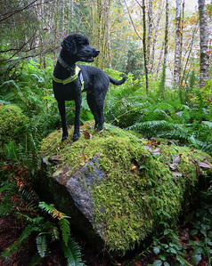 Toby displays a mossy rock.