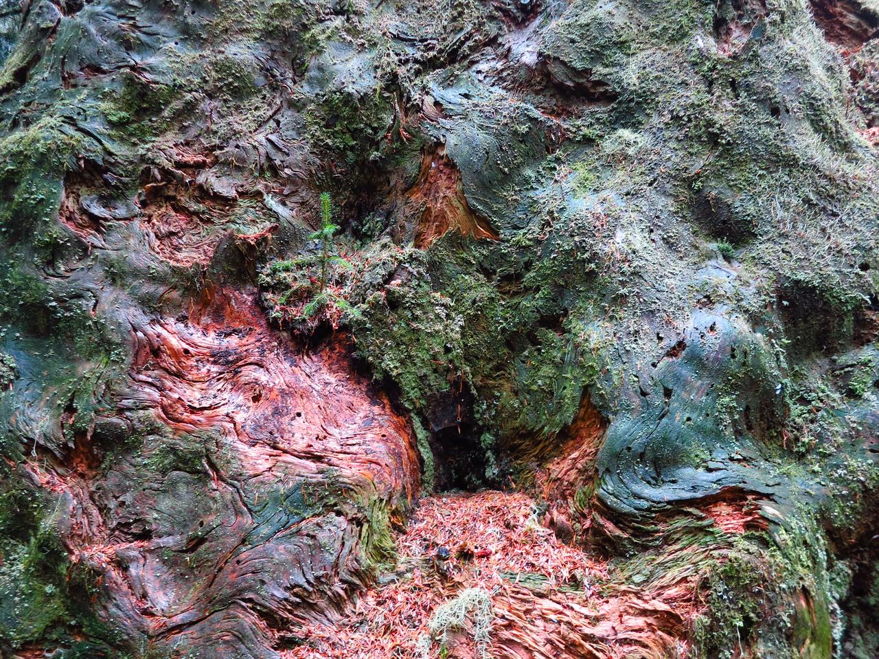 Stump textures.