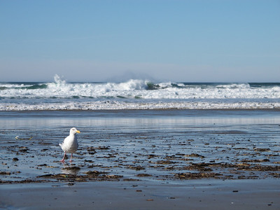 surf's breaking in Manzanita