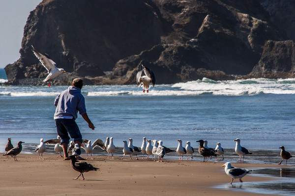 A man with a bag full of bread crumbs gets the full attention of sea gulls, with a couple birds already in position to catch the next pitch of food.