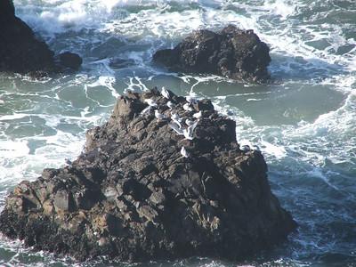 Seagull Rock