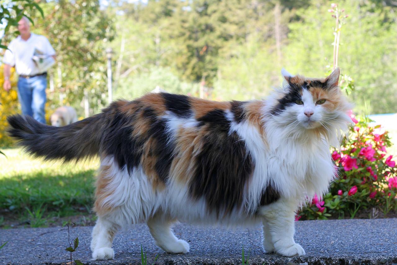 Kitty, Bandon, OR