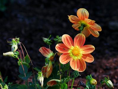 9894 Orange Flowers