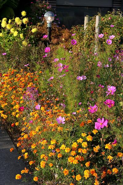 0015 Flowers outside Restaurant