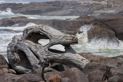 Huge driftwood stump in Yachats, OR.