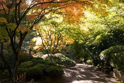 A path under shade