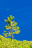 Tree and Lake<br /> <br /> Lone sapling with the blue of Crater Lake as a background.