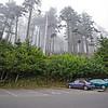 Ecola State Park, Cannon Beach Oregon
