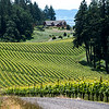 Vineyards, Oregon