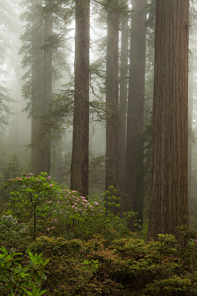 Redwoods National Park