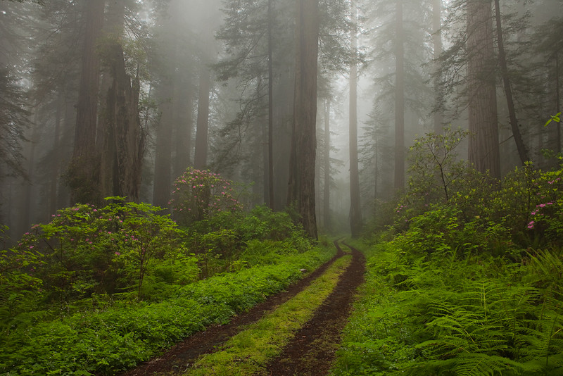 Damnation trail Redwoods NP