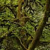 Cloudforest moss