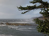 Looking north from Cape Arago.
